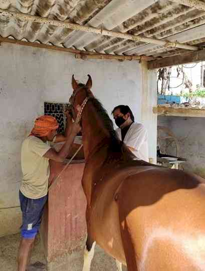 KEEPING EQUIDS HEALTHY: BROOKE INDIA PROVIDES VETERINARY SERVICES DURING THE COVID 19 LOCKDOWN